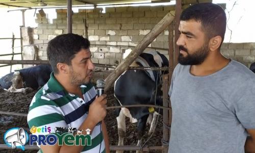 Sığırların Beslenmesi - Yetiş Proyem 1.Bölüm