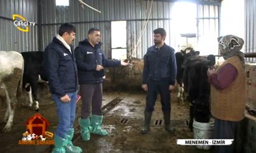 Ahırım Şahane İzmir-Menemen